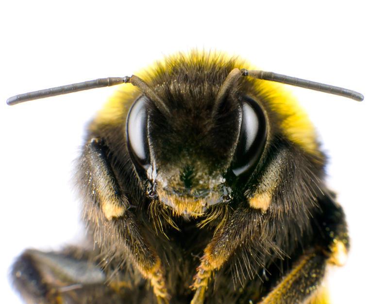 8 Niesamowitych Faktów O Pszczołach Których Z Całą